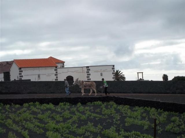 Views 2 - Casita Blanca, Nazaret, Lanzarote